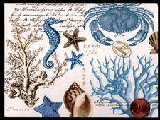 Seahorse, Crab Starfish Shells Corals - Small Blank Greeting Note Card New