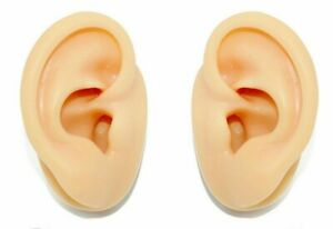 Left or Right Human Size Silicone Ear Body Part Display Practice Piercing Model