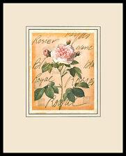 Pierre-Joseph Redoute Maiden's Blush Rose Poster Kunstdruck und Rahmen 50x40cm