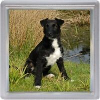 Patterdale Terrier Coaster No 5 Design by Starprint