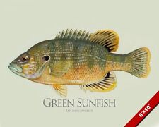 GREEN SUNFISH FISH PAINTING FRESHWATER FLY FISHING ART REAL CANVAS PRINT