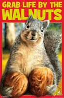 GRAB LIFE BY THE WALNUTS - FUNNY SQUIRREL POSTER - 22x34 - HUMOR 17522