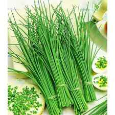 Seeds Onion Bow Rezanets Chives Green Vegetable Organic Heirloom Russian Ukraine