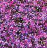100g Rocailles Perlen Glas Lila tönen Grösse 2/3/4 mm Gemischt Schmuck Z9#100g