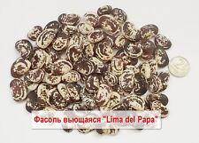 Pole beans 100 or 200 seeds «LIMA DEL PAPA» - Фасоль лимская