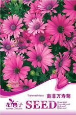 1 Pack 15 Transvaal Daisy Seeds Osteospermum Garden Flowers A162