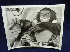 #AY NASA Vintage 1963 8x10 B&W Press Photo Ham First Chimpanzee in Space Mercury