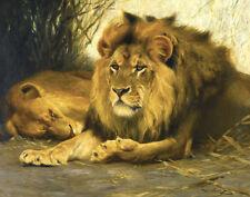 Kuhnert Wilhelm Resting Lions Canvas 16 x 20   #3407