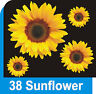 38 Sunflower flower decals car stickers graphics nursery wall window art