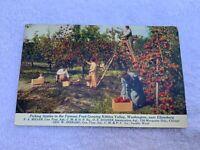 1900s Ad Postcard Chicago, Milwaukee & St Paul Railway Apple Picking Kittitas Wa