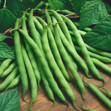 1/4 Lb Blue Lake 274 Green Bush Bean Seeds - Everwilde Farms Mylar Seed Packet