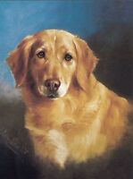 Golden Retriever Head Study Dog Puppy Dogs Puppies Vintage Art Poster Print