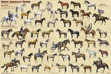 North American Horses Educational Reference Equine Chart Poster 24x36