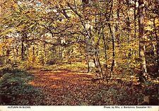 BR83022 autumn in blean   uk