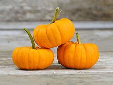 Pumpkin JACK-BE-LITTLE-Pumpkin Seeds-BAKE WHOLE, DELICIOUS-20 FRESH SEEDS.
