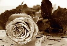 Giant Wall Mural Photo Wallpaper ROSE FLOWER Home Decor Art 360x254cm B&W floral