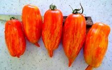 Striped Roman Tomato, 25 seeds, ideal for sauce, rich flavor, good sun dried