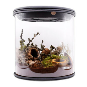 Tarantula Room Polycarbonate Cylinder or Square Spider Invertebrate Terrarium