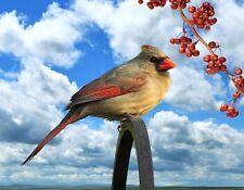 METAL MAGNET Female Cardinal Metal Bar Berries Bird Birds Cardinals MAGNET
