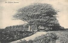 POSTCARD  SOMERSET   HOLFORD  Beeches