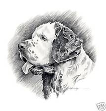 Clumber Spaniel Pencil Drawing Dog 11 x 14 Art Print by Artist Djr