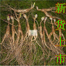 10pc fresh Wild ginseng seedlings/Bacillus Plants for garden plant free shipping