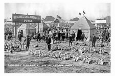 pt9237 - Ransomes' Ploughs at Altrincham Show - photograph