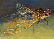 © ART - Insect Cherry nosed Cicada Bug Original wildlife nature print by Di