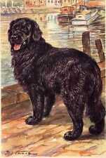 Newfoundland - MATTED Dog Art Print - German / NEW U