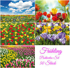 """FRÜHLING & OSTERKARTEN"" Postkarten-Set Blumen (50 St.) - ideal für Postcrossing"