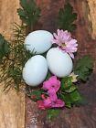 Ameraucana hatching eggs for sale, Self Blue, Lavender, 12 eggs.