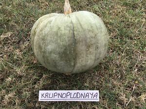 Pumpkin KRUPNOPLODNAYA-Pumpkin Seeds-FROM RUSSIA WITH LOVE-10 SEEDS