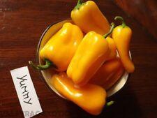 Yummy Paprika 5+ Samen - Saatgut - Leckerbissen!