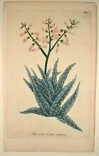 J. W Weinmann original Mezzotint 1739 aloe vera costa spinosa phytanthoza