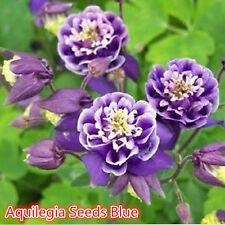 50PCS Aquilegia Seeds Dark Blue Columbine Double Flower Plant Home Garden Decor