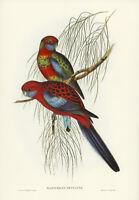 JOHN GOULD PENNANT'S PARAKEET VINTAGE AUSTRALIAN BIRD ART PRINT POSTER