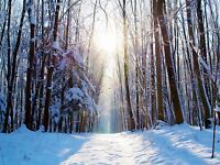 NATURE LANDSCAPE SNOW WINTER FOREST TREE SUN POSTER ART PRINT PICTURE BB1492A
