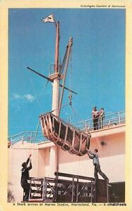 1950s Amusement Shark Marine Studio Marineland Florida Dexter postcard 3637