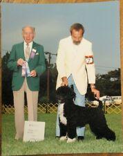 Portuguese Water Dog 1987 Champion Dog Show 8 x 10 Photograph / Photo