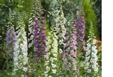Plantas, semillas y bulbos fríos