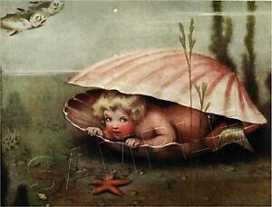 VINTAGE VICTORIAN MERMAID BABY CLAM SHELL MERBABY SEA NYMPH *CANVAS* ART PRINT