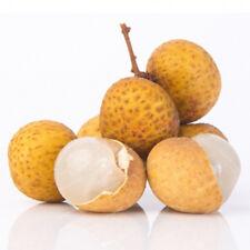 Dimocarpus Longan Seeds Organic Fruit Bonsai Tree Seed  Longan Seeds Longan Tree