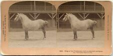 DRAFT HORSE PERCHERON LITTLETON NH KILBURN STEREOVIEW