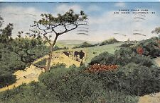 SAN DIEGO CALIFORNIA TORREY PINES PARK NORTH OF LA JOLLA POSTCARD 1955 PSTMK