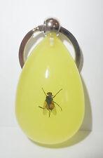 Insect Keychain Blue Bottle Fly Calliphora vomitoria Specimen YK09 Glow