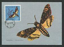 POLEN MK 1963 INSEKTEN SCHMETTERLINGE MAXIMUMKARTE CARTE MAXIMUM CARD MC CM d194