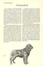 "The Newfoundland - Vintage Dog Art Print - Matted ""G"""