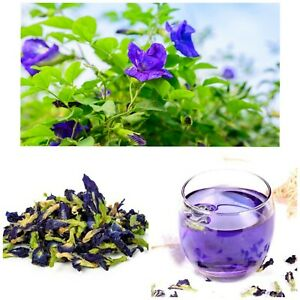 100% Natural Organic Dried Blue Butterfly Pea 50 Flowers Herbal Healthy Drink