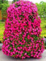 100pcs/bag Little rose seeds bonsai flower Exotic seeds Garden Decor potted plan