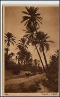 ARABIEN AFRIKA Wüste Oase Oasis Vintage Poscard alte Ansichtskarte AK ~1910/20